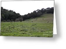 Cattles At Fernandez Ranch California - 5d21104 Greeting Card