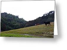 Cattles At Fernandez Ranch California - 5d21106 Greeting Card