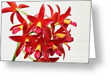 Cattleya Chocolate Drop Kodama Greeting Card