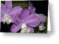 Cattleya Loddigesii 3877 Greeting Card