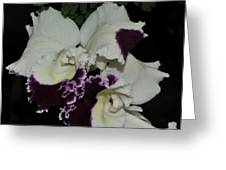 Cattleya Moscombe 'the King'  3 Of 3 Greeting Card