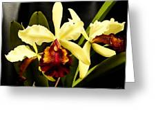 Cattleya Too Greeting Card