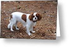 Cavalier Dog Greeting Card
