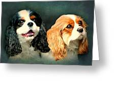 Cavalier King Charles Greeting Card by Diana Angstadt