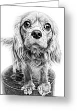 Cavalier King Charles Spaniel Puppy Dog Portrait Greeting Card