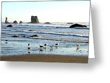 Cavorting Seagulls Greeting Card