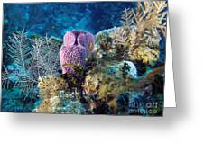 Cayman Reef Greeting Card