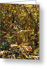 Cchestnut Tree In Autumn Greeting Card