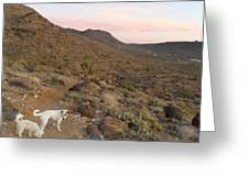Ceaser, Mocha, And Chico In The Cerbat Mountains Greeting Card