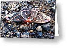 Cecropia Moth Blending In Greeting Card