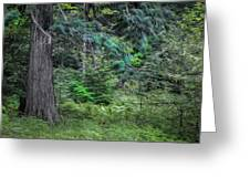 Cedar Along The Trail Of Cedars Glacier National Park Painted Greeting Card