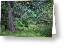 Cedar Along The Trail Of Cedars Glacier National Park  Greeting Card