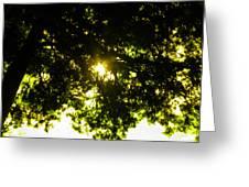Cedar Filtered Sun Greeting Card