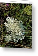 Cedar Flower One Greeting Card