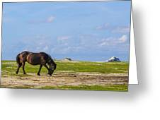 Cedar Island Wild Mustangs 48 Greeting Card