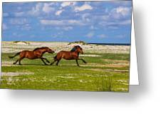 Cedar Island Wild Mustangs 51 Greeting Card
