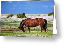 Cedar Island Wild Mustangs 59 Greeting Card