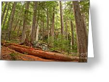 Cedar Logs At Garibaldi Greeting Card