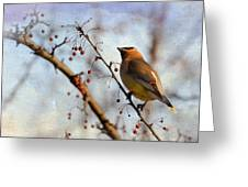 Cedar Waxwing And Berries Greeting Card