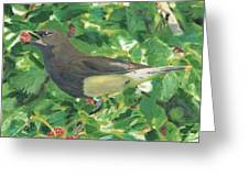 Cedar Waxwing Eating Mulberry Greeting Card