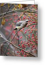 Cedar Waxwing Feeding Greeting Card