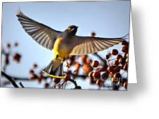 d07646a43d Cedar Waxwing Flight Carry-all Pouch for Sale by Nava Thompson