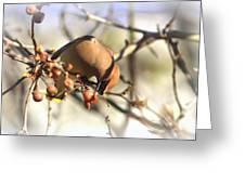 Cedar Waxwing - Img_0010-7x5 Greeting Card