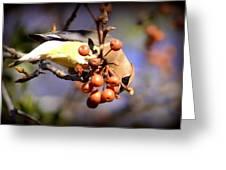 Cedar Waxwing - Img_9760-004 Greeting Card