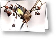 Cedar Waxwing - Img_9835-7x5 Greeting Card