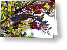 Cedar Waxwing In Flight 030515a Greeting Card