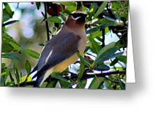 Cedar Waxwing In Tree 030515a Greeting Card