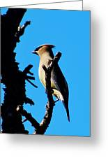 Cedar Waxwing In Tree 030515aaa Greeting Card