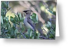 Cedar Waxwing On The Malheur National Forest Greeting Card