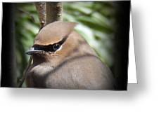 Cedar Waxwing Profile Greeting Card