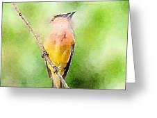 Cedar Waxwing Watercolor Art  Greeting Card
