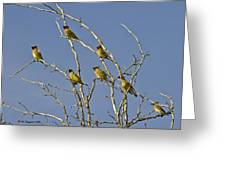 Cedar Waxwings Greeting Card