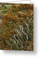 Cedars In The Fall Greeting Card