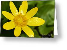 Celandine Greeting Card