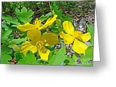 Celandine Poppy Or Wood Poppy - Stylophorum Diphyllum Greeting Card