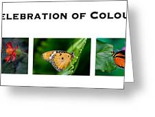 Celebration Of Colour Greeting Card