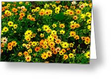 Celebration Of Yellows And Oranges Study 3 Greeting Card