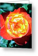 Celebration Rose Palm Springs Greeting Card
