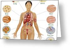 Cells Of The Body Greeting Card