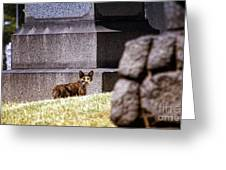 Cemetery Cat Greeting Card
