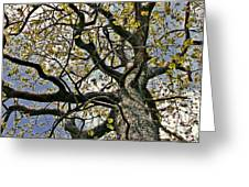 Cemetery Oak Greeting Card