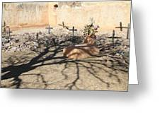 Cemetery Tumacacori Mission Greeting Card