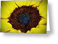 Center Of A Sunflower Greeting Card