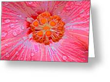 Center Of Attention Greeting Card by Rebecca Flaig