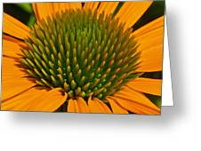 Center  Of Cone Flower Greeting Card