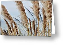 Central Coast Pampas Grass II Greeting Card
